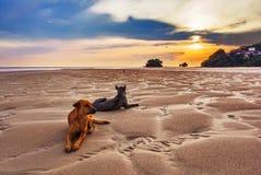 Honden op het strand bij zonsondergang Stock Fotografie