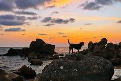 Honden op het strand bij zonsondergang Royalty-vrije Stock Fotografie