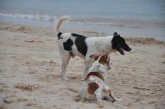 Honden op het zonnige strand Stock Foto's