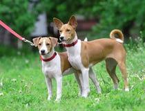 Honden over de groene grasachtergrond. Royalty-vrije Stock Foto