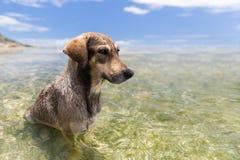 Honden in overzees of het water van Indische Oceaan op Seychellen Stock Afbeelding