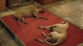 Honden sleepinig in een straat