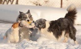 Honden in sneeuw Royalty-vrije Stock Afbeeldingen