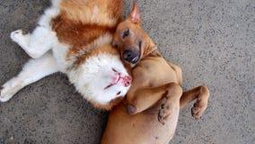 2 honden Togerther Royalty-vrije Stock Afbeeldingen