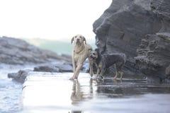 Honden tussen de rotsen royalty-vrije stock afbeeldingen