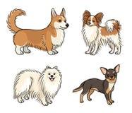 Honden van verschillende rassen in kleur set6 - vectorillustratie stock illustratie
