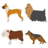Honden vlakke reeks stock fotografie