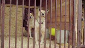 Honden in vogelhuis in een hondschuilplaats stock videobeelden