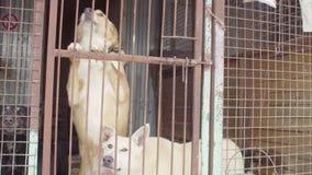Honden in vogelhuis in een hondschuilplaats stock video