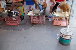 Honden voor Lunch Royalty-vrije Stock Foto