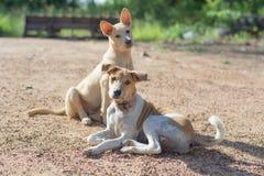 Hondentroep Royalty-vrije Stock Afbeeldingen