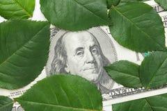 Honderd dollarbankbiljet onder groene bloembladeren Royalty-vrije Stock Afbeeldingen