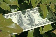 Honderd dollars Stock Fotografie