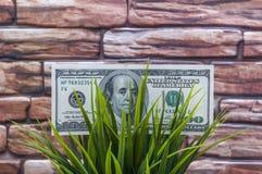 Honderd dollarsrekening in gras op een bakstenen muurachtergrond Het concept milieubescherming stock foto's