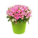 Honderd roze rozen Royalty-vrije Stock Foto's