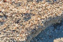 Honderden van encrusted shells op het strand Stock Foto