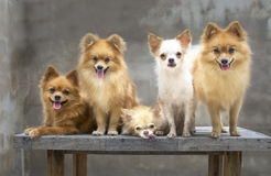hondfamilie Stock Afbeeldingen