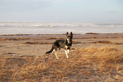 Hondgangen Royalty-vrije Stock Foto