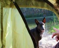 Hondouside een het kamperen tent royalty-vrije stock afbeelding