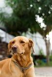 hondportret op bokehachtergrond royalty-vrije stock afbeelding