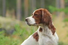 Hondportret op groene achtergrond Stock Afbeeldingen
