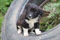 Hondpuppy stock afbeelding