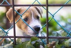 Hondpuppy die achter een omheining kijken Stock Foto's