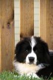 Hondpuppy op het gras met hout op de achtergrond wordt gelegd die stock foto's