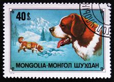 Hondras St Bernard Dog, berg resque hond, circa 1978 Stock Afbeelding