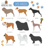 Hondrassen Werkend (lettend op) hond vastgesteld pictogram Vlakke stijl Stock Foto's