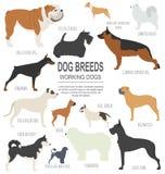 Hondrassen Werkend (lettend op) hond vastgesteld pictogram Vlakke stijl Stock Foto