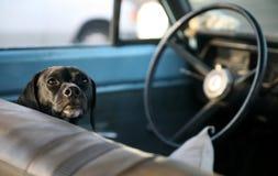 Honds Bestuurder royalty-vrije stock fotografie