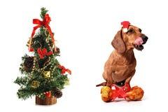 Honds Kerstmis stock afbeelding