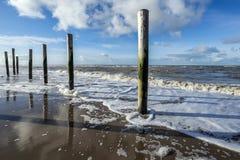 Dunes at Petten. Hondsbossezeeduinen at Petten , Netherlands , Dunes Royalty Free Stock Images