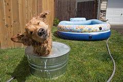 Hondschok Royalty-vrije Stock Afbeeldingen