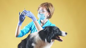 Hondsdolheidsvaccin r stock footage
