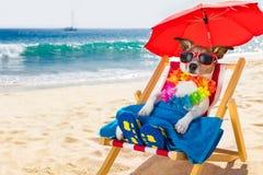 Hondsiësta op ligstoel Stock Afbeeldingen