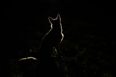 Hondsilhouet bij nacht stock fotografie