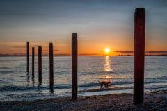 Hondsilhouet bij zonsondergang dichtbij de oude pijler van Punt Roberts Stock Afbeeldingen
