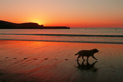 Hondsilhouet en voetafdrukken op strand bij zonsondergang Stock Afbeeldingen