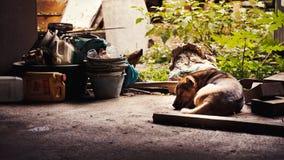 Hondslaap Stock Afbeelding