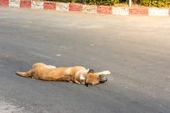 Hondslaap in de straat Stock Afbeelding