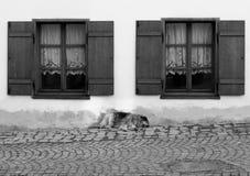 Hondslaap tussen twee vensters Stock Afbeeldingen