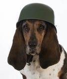 Hondsmilitair Stock Afbeelding