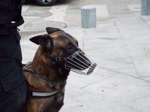 Hondspatrouille Boekarest Stock Foto's