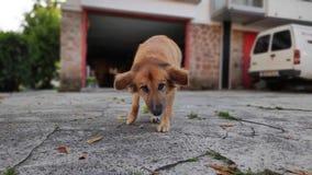 Hondspelen in de tuin royalty-vrije stock afbeelding