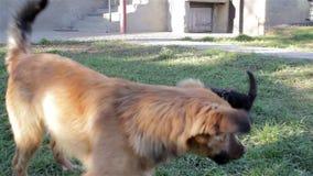 Hondspelen met een kat stock videobeelden