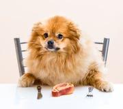 Hondspitz zit bij de lijst royalty-vrije stock afbeelding