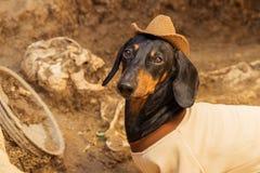 Hondtekkel, zwarte en tan, in de kleren van een archeoloog en een hoed op archeologische uitgravingen tegen de achtergrond van B stock foto