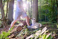 Hondtrein door een mens in het bos tegen de zon met stralen van zonlicht en sunstars Royalty-vrije Stock Afbeelding